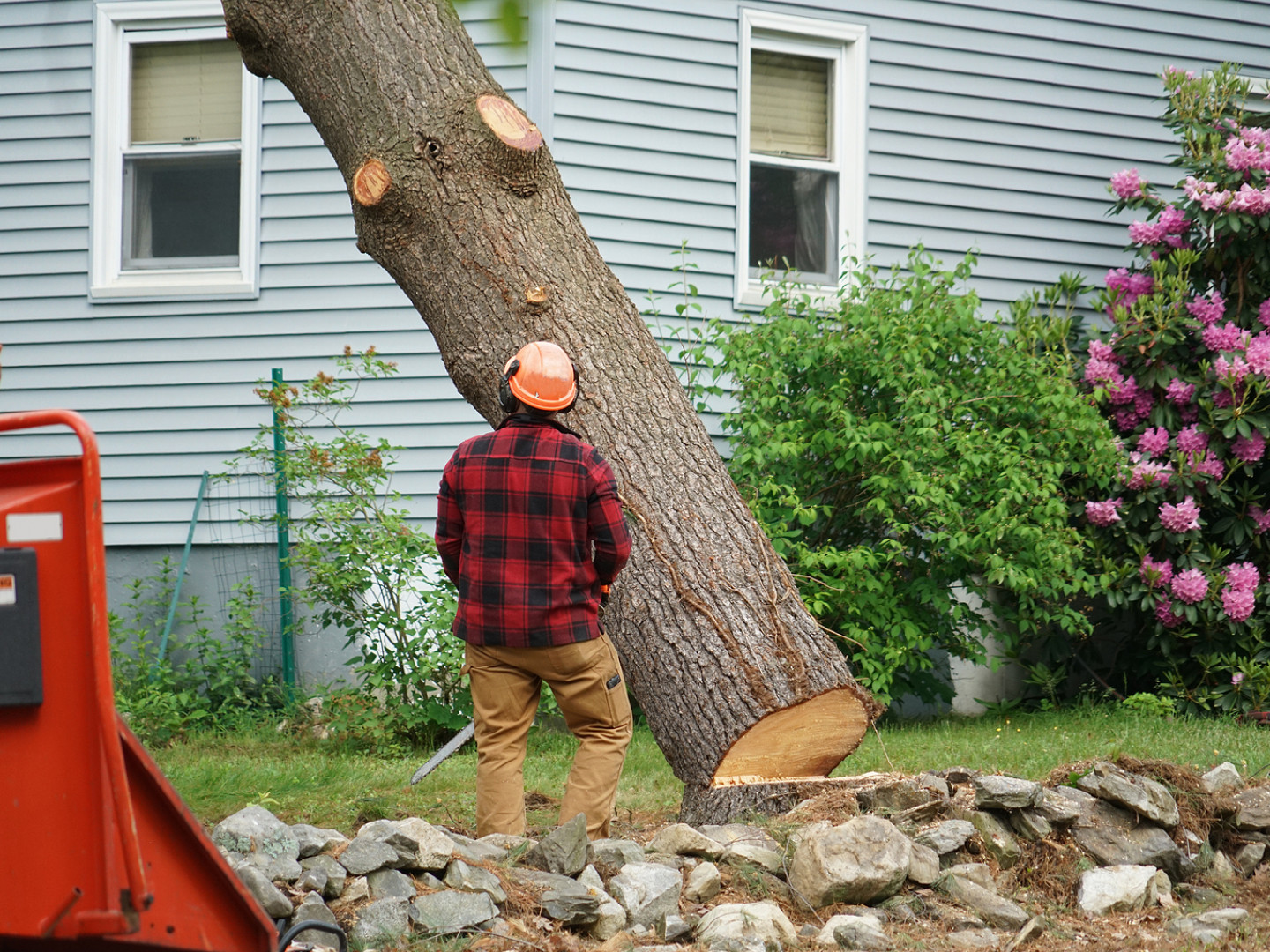 Common reasons you may need tree removal