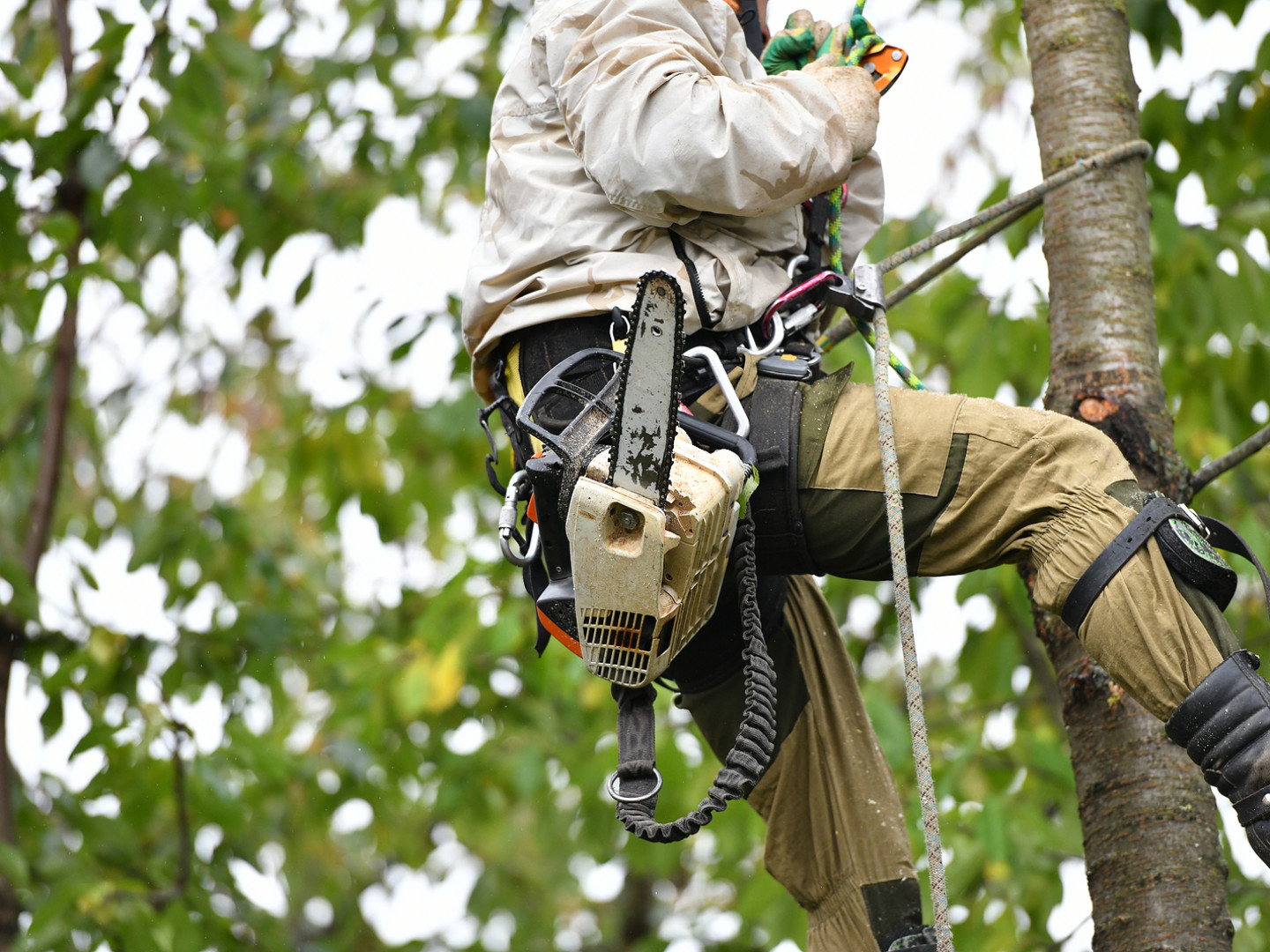 5 benefits of tree trimming
